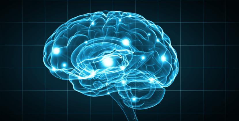 Le cerveau et le son